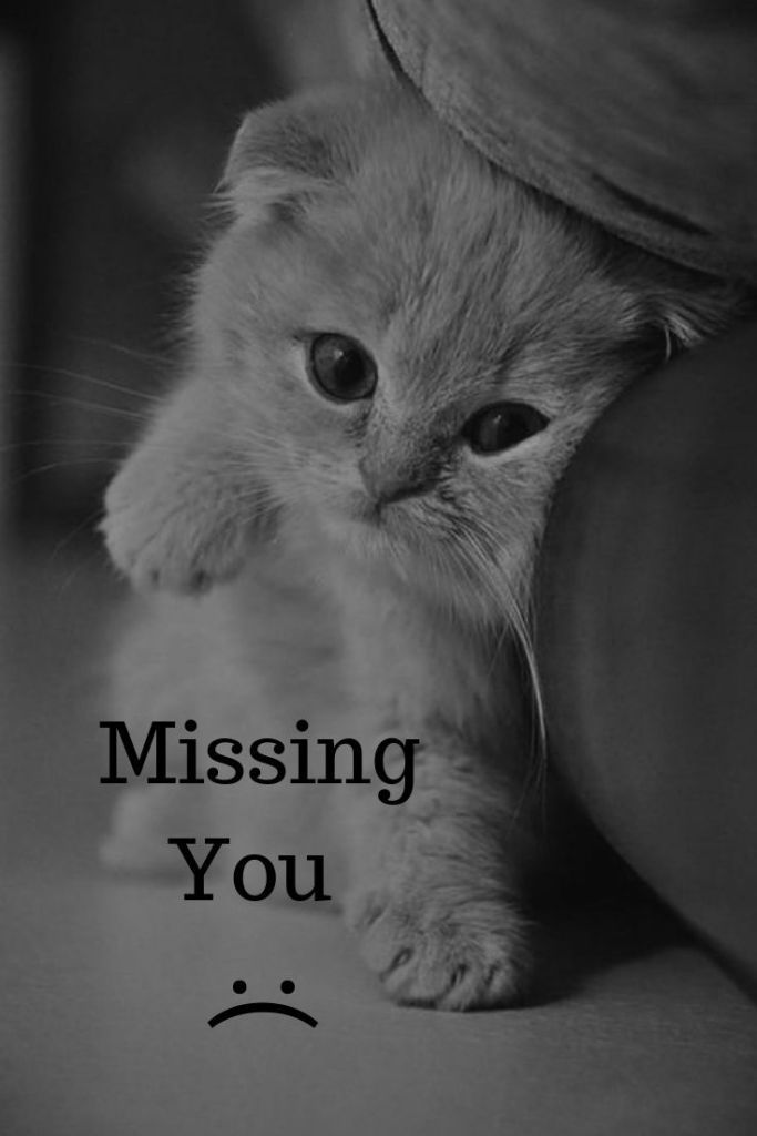 Miss You Cat Meme : Memes, Funny,, Quotes