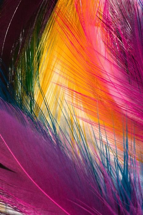 Vibrant colored feathers