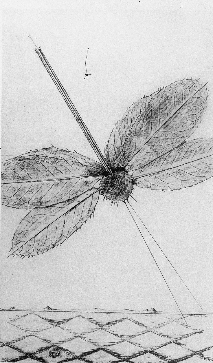Die Frottage Blitze unter vierzehn Jahren von Max Ernst
