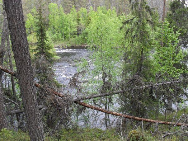 Oulanka National park, Kuusamo/Salla.