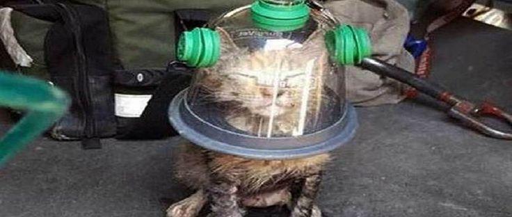 DieKatze im Einmachglas! Was steckt wirklich dahinter?  Ganz sicher wirkt das Bild mit der Katze und dem Einmachglasrecht ungewöhnlich auf den ersten Blick, man könnte fast glauben, es handelt sich um einenKatzealien der gleich zurück in