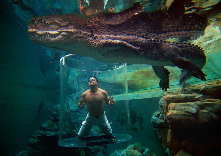 cool pool: craziest pool experience: Crocosaurus Cove, Australia where you get up close  & personal in glass tube underwater with crocs around!  (via BuzzFeed.com)