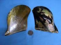 Takasheru Yakokai-Takasekai-белая бабочка оболочки Kurochokai, морское ушко, моллюски сиденье Raden Luer