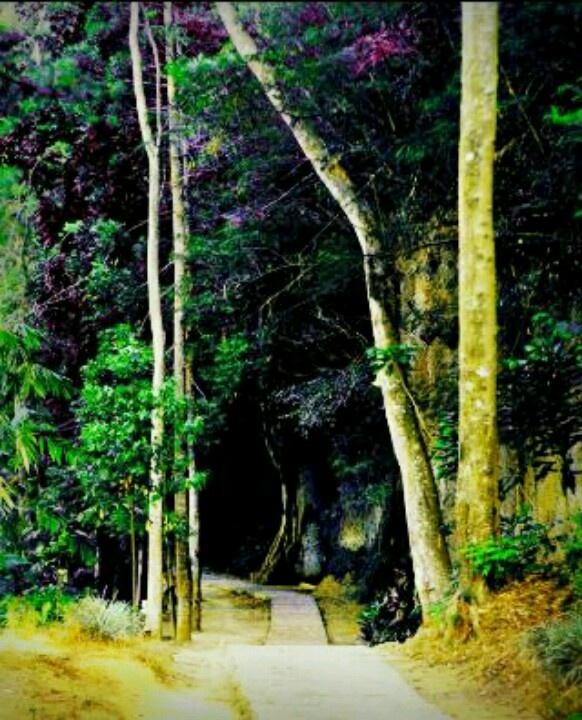 Juanda forest park bandung