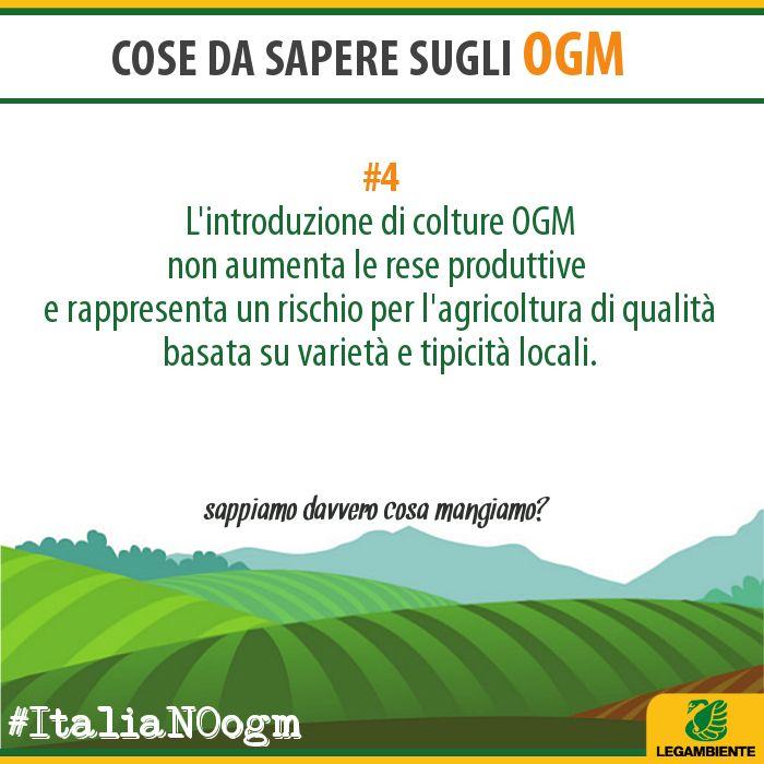 OGM Info/4 www.legambiente.it/italia-NO-ogm #ItaliaNOogm