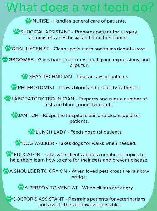 Best Veterinary Stuff Images On   Veterinary