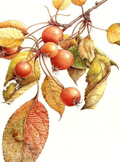Bewitching, Beautiful And Bountiful Botanical Art - Bored Art