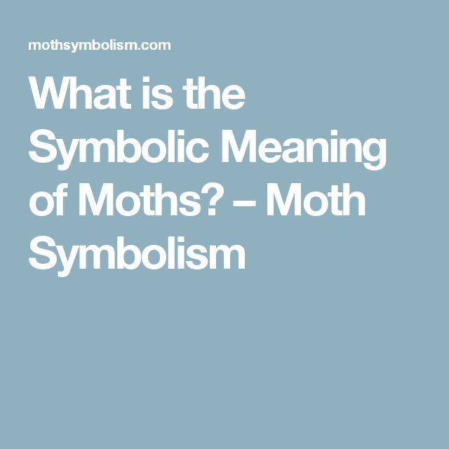 What is the Symbolic Meaning of Moths? – Moth Symbolism