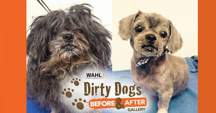 Americas Top Dogs: 10 MOST AMAZING SHELTER DOG MAKEOVERS  Pet grooming leader Wahl teams with GreaterGood.org to put a fresh face on dog adoption  Mouse Before and After  STERLING ILL. (Aug. 8 2017)  Mouse was found hiding in the shadows. From the looks of him it was clear most of his 10 years had been very hard but under the dirt and matted fur was a huge heart ready to give love.  Peggy Sue Before and After  Thankfully after a grooming Mouse quickly found his forever family and was named…