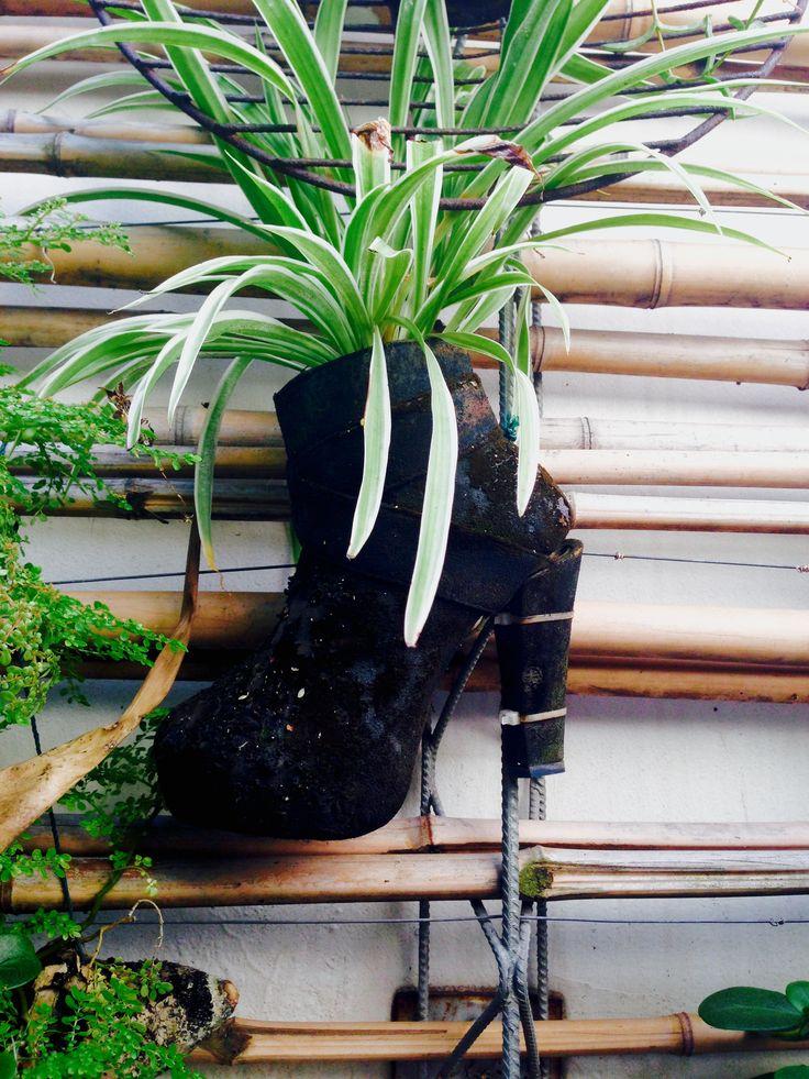 #6 WalkingGreen_Rooftopgarden_Durban_SouthAfrica #gardening #plants #reuse