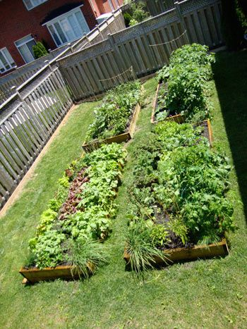Beautiful U0026 Nice #Home_Garden_Ideas. Square Foot Gardening In A Small Yard  From Start