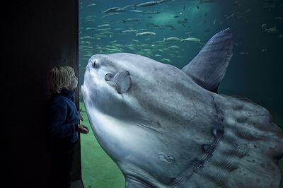 Hirtshals-tengeri akvárium, Dánia