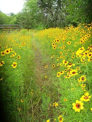 """Ahhh...the childhood memories!!!!  I want a path like this one near my future """"dream"""" home! <3"""