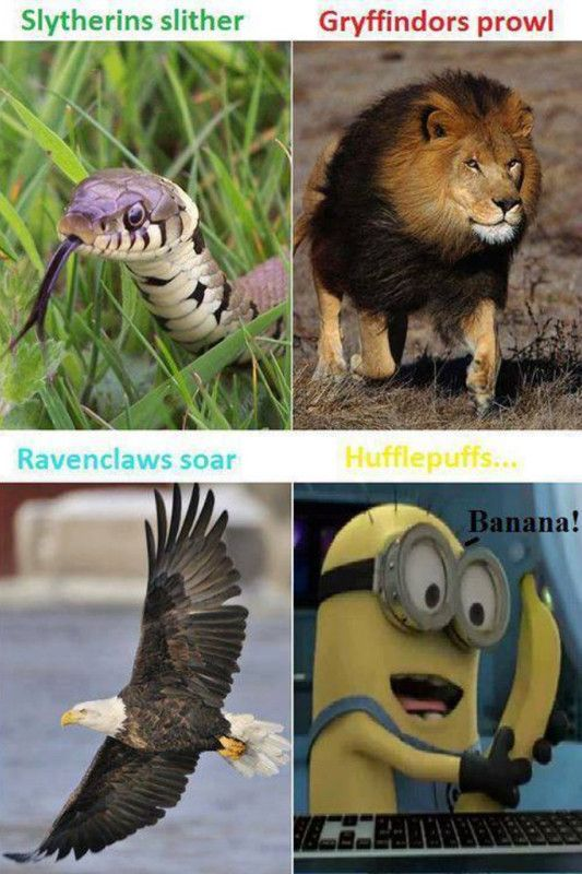Hufflepuff>>> yeesh us Hufflepuffs are more than minions guys. Badgers are freaking scary too you know