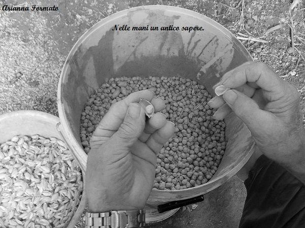 mani di agricoltore che sbucciano ceci