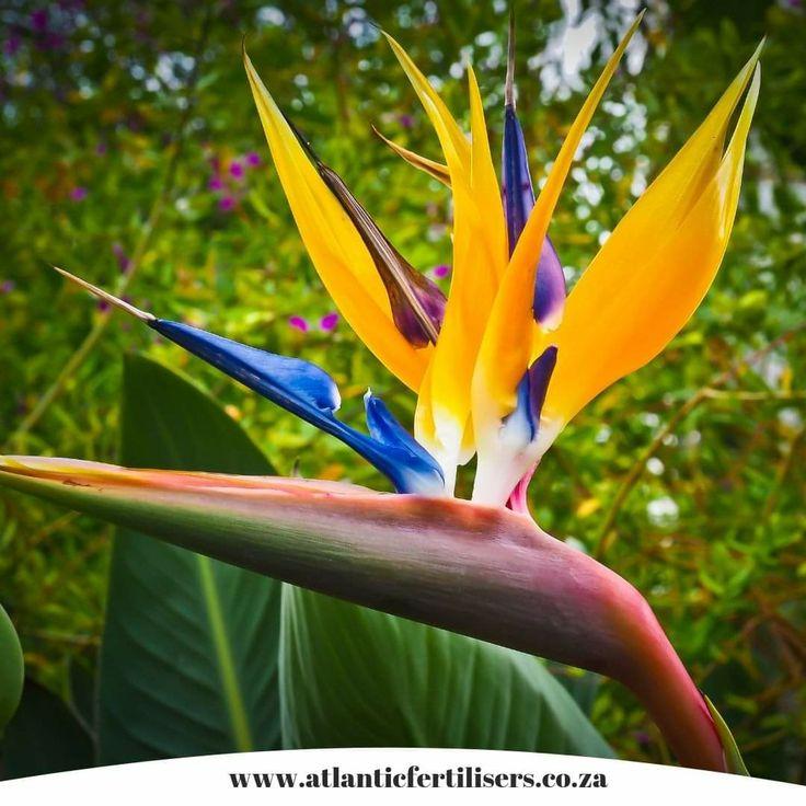 Pin by Ria Carelsen on flowers Sunken garden, Plants