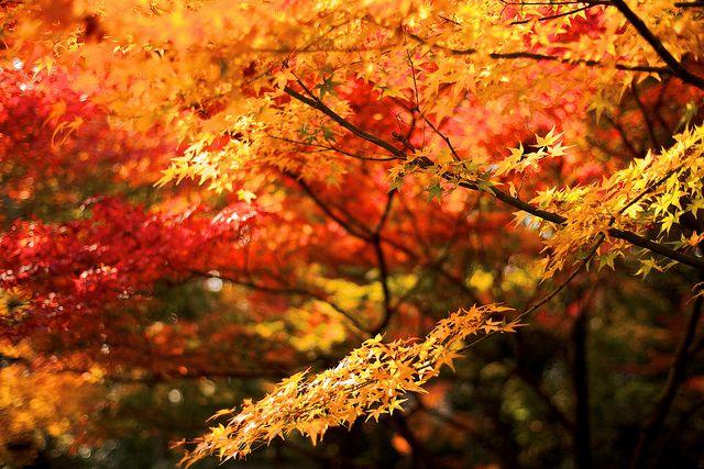 京の秋の色 Autumn Colors of Kyoto, 2011. by sunnywinds*, via Flickr