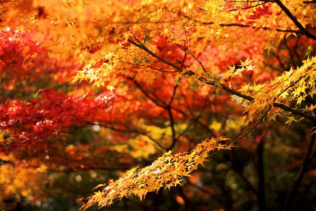 京の秋の色 Autumn Colors of Kyoto, 2011. by sunnywinds*, via Flickr