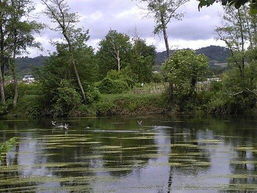 Patos en río Avia A Quinza Rivadavia