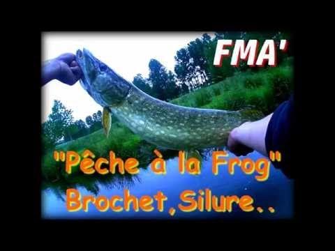#FMA - Pêche du Brochet et Silure à la Frog(Grenouille) Tapes en direct (2016 HD)  #brochet #direct #grenouille