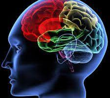 Professors: Gezonde darmbacteriën = gezond gedrag en gezonde hersenen. De invloed van probiotica op gedrag en gemoedstoestand