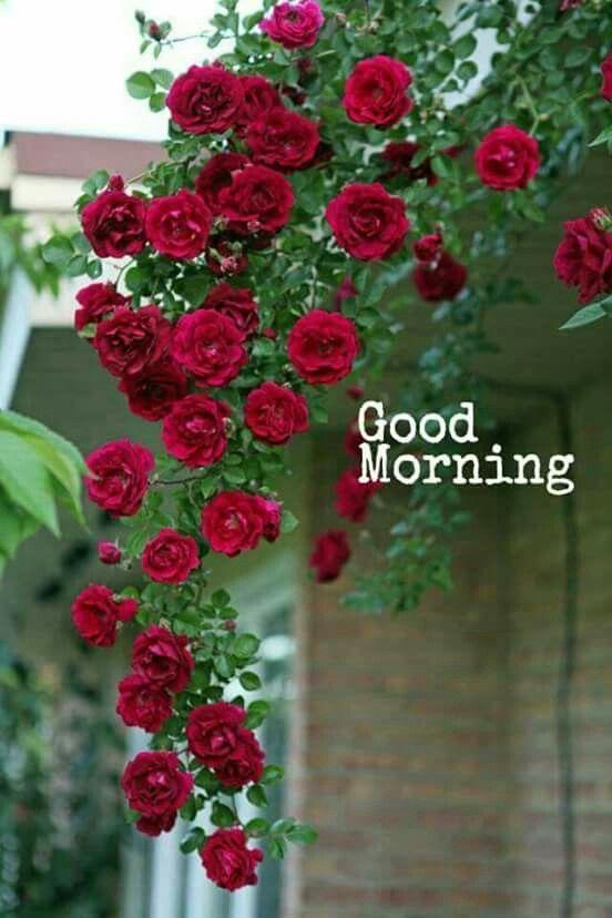 Good Morning .