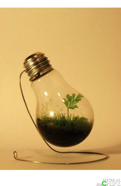 Light Bulb Farming.  In danger because of CFL's