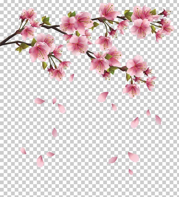Paper Cherry Blossom Png Azalea Blossom Branch Cherry Cherry Blossom Cherry Blossom Clip Art Cherry Blossom Cherry Blossom Branch