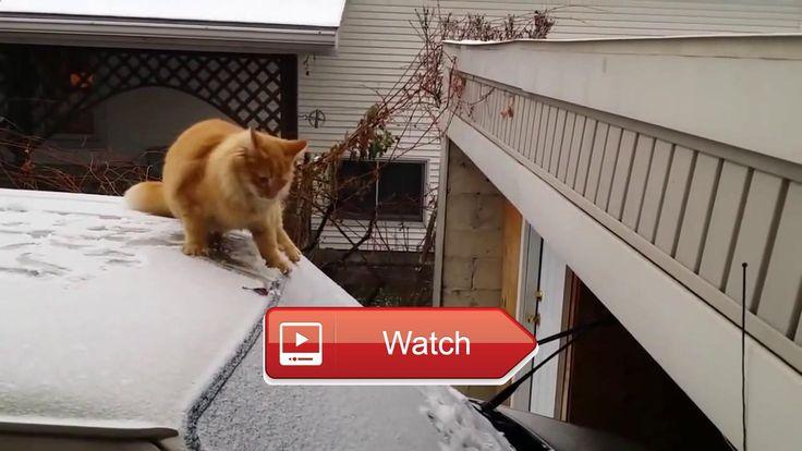 😸 Funny Cats Video Funny Cats Compilation 😼 Funny Cats Kucing imut video hewan peliharaan lucu kucing peliharaan lucu dan imut Hewan…