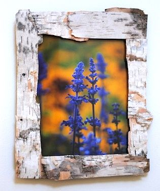 Recycle crafts/Earth Day: Bark Frames, Birches Bark, Birches Frames, Bark Pictures, Picture Frames, Frames Ideas, Crafts Earth, Wood Frames, Pictures Frames