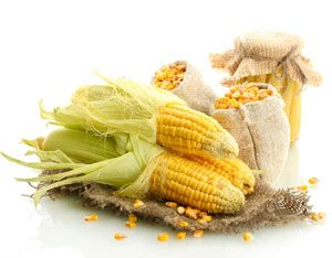 The Great Transgenic Contamination of Mexican Maize