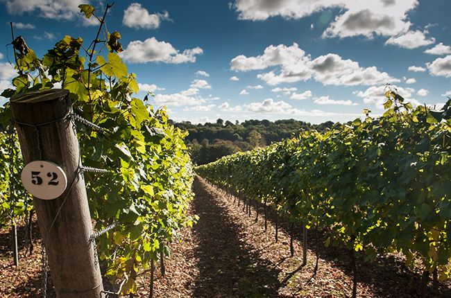 See five English wineries to visit, in the South Downs - and just a short trip from London - taken from Lonely Planet's new wine travel book Wine Trails.