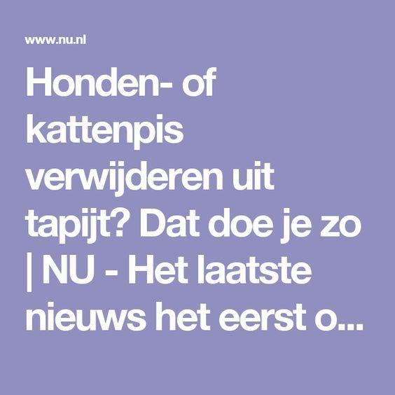 Honden- of kattenpis verwijderen uit tapijt? Dat doe je zo   NU - Het laatste nieuws het eerst op NU.nl