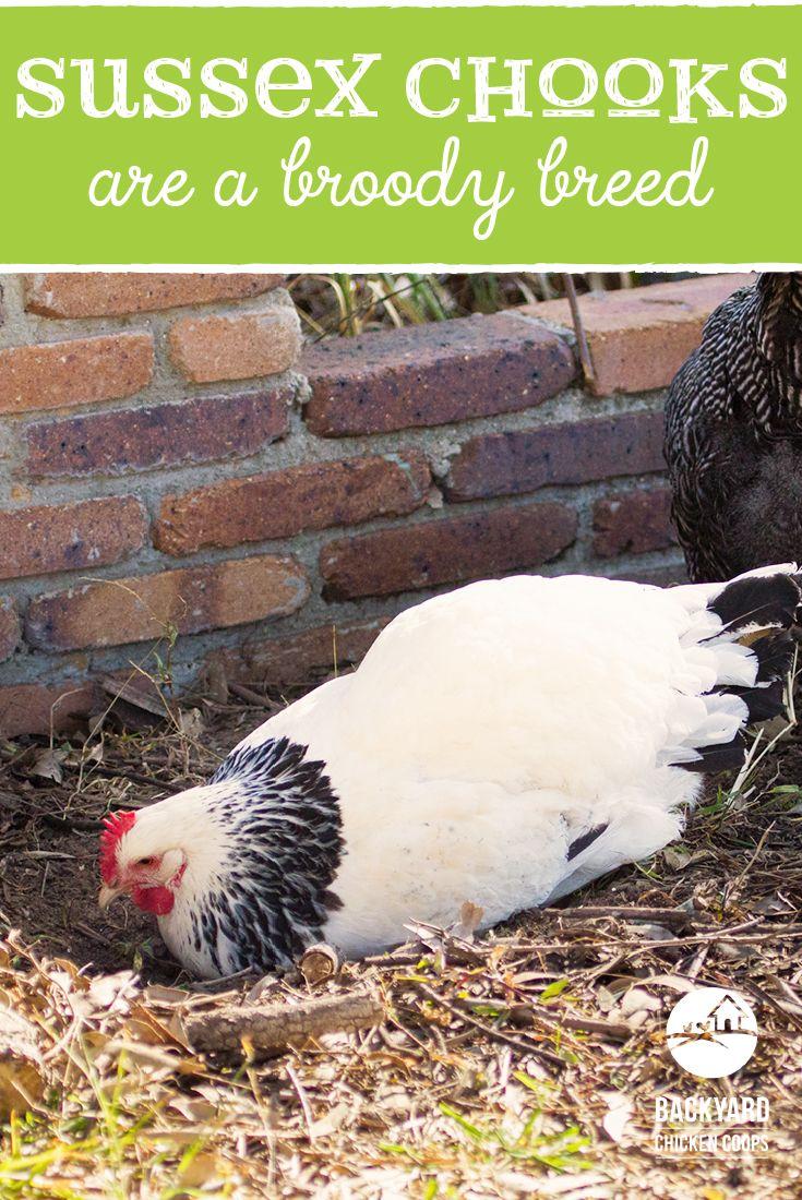 9 best sussex images on pinterest chicken coops sussex chicken
