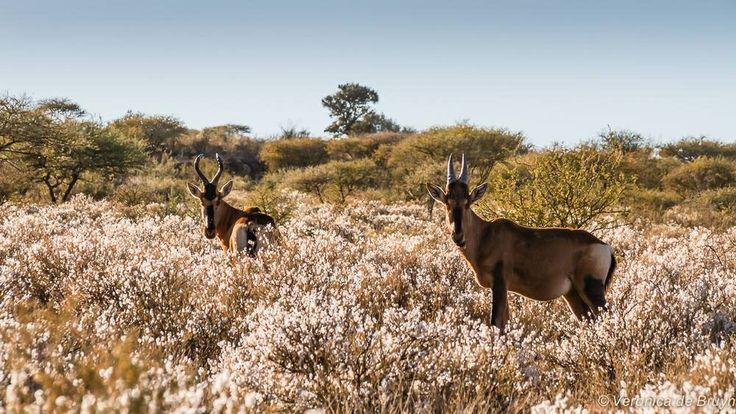 Mokala National Park, Kimberley, South Africa