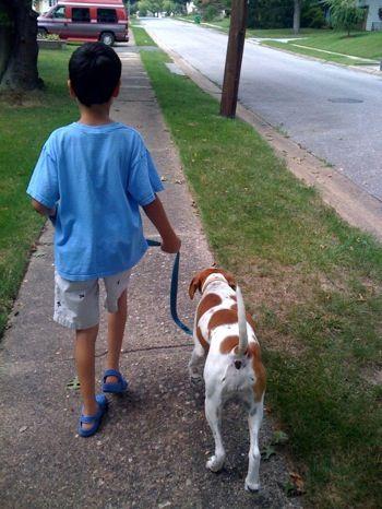 Recognizing Dominant Behaviors in Dogs