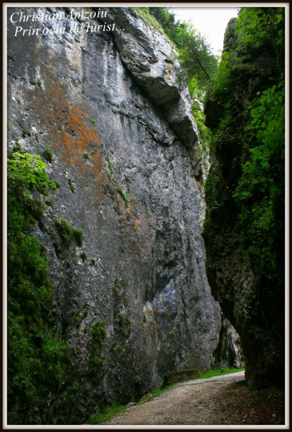 Zarnesti gorges. In Piatra Craiului mountains