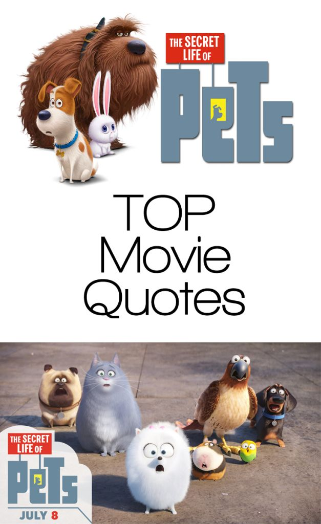 The Secret Life of Pets Quotes - TOP Movie Quotes! - EnzasBargains.com