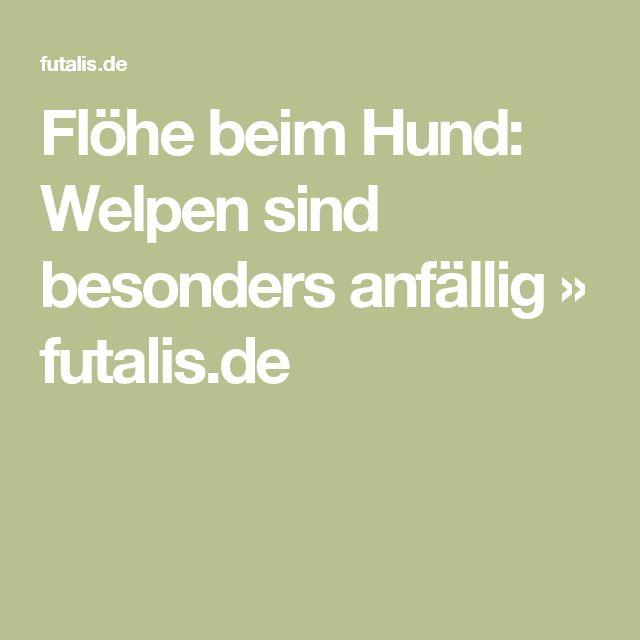 Flöhe beim Hund: Welpen sind besonders anfällig » futalis.de