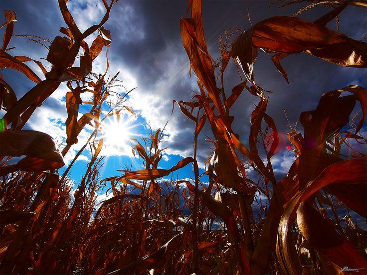 Les trois principales banques françaises avaient promis en 2013 de mettre fin à leurs activités spéculatives sur les produits agricoles. Une étude de l'ONG Oxfam révèle le contraire. Cette spéculation, qui a contribué il y a quatre ans à faire exploser...