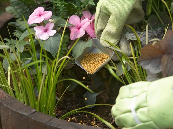 Внесение удобрений для многолетних красивоцветущих растений