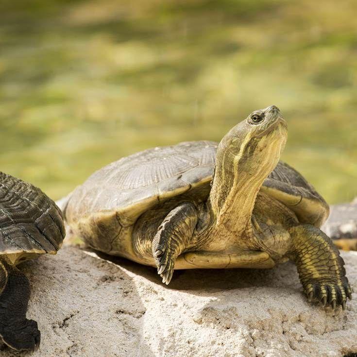 Turtle in Florida