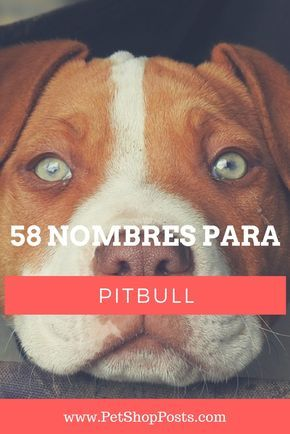 Sugerencias de Nombres para Tu Pitbull
