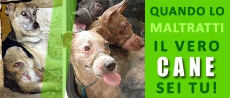 Gatti & Cani di Casa: Cuccioli in viaggio senza acqua né cibo. Stremati ...