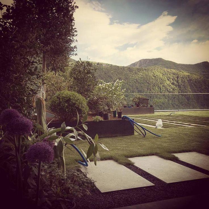 #workinprogress #allium #garden #green #swiss #landscape #villasullago #gardendesign #giardinopensile #giardino #verde #prato #springtime #spring #kronos2.0 #landscape_lovers #landscapestudio #giardinosegreto by giardino_segreto