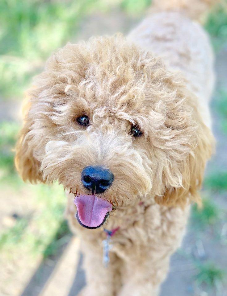 3 easy vet approved homemade dog food recipes dog food