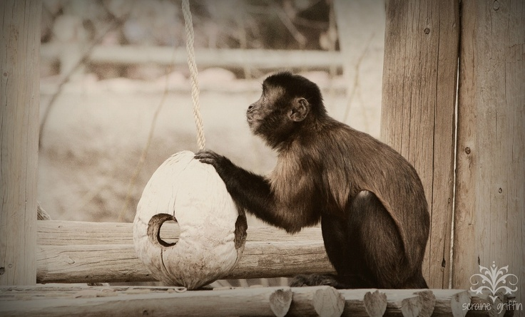 60 Best Images About Enrichment Ideas On Pinterest Zoos