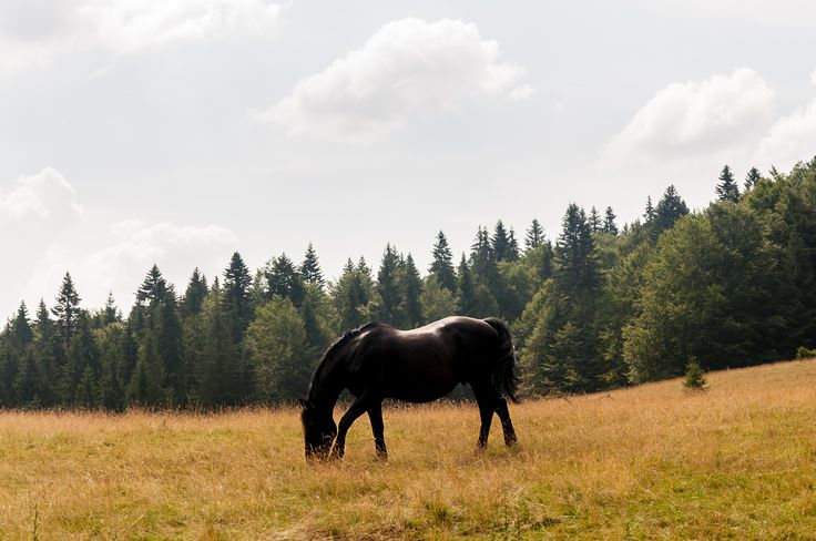 Black horsie by Marcel Ilie on 500px