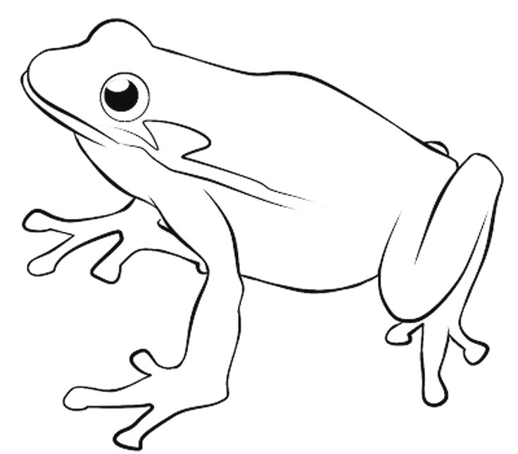 kids free frog coloring sheet printable frog coloring pages for kids masked tree swimming page masked frog coloring sheet tree frog