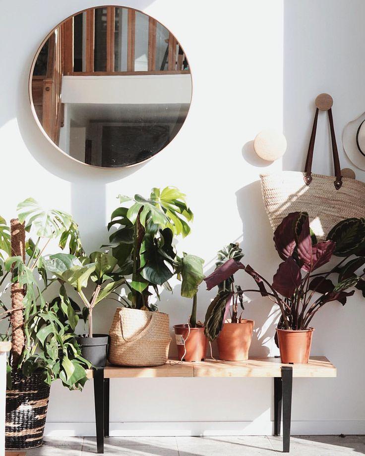 Des plantes vertes meublent l'entrée et lui redonne vie